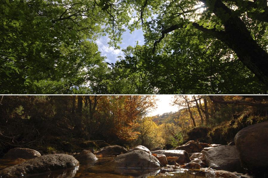 Buenas razones para visitar la Sierra Pobre de Madrid