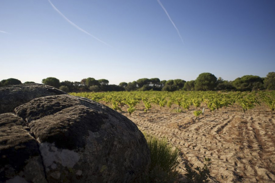 The most authentic wine route in Madrid